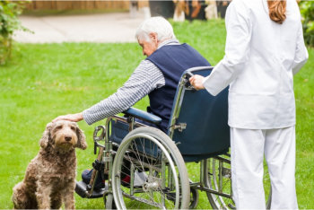 elder woman touching a dog with her caregiver